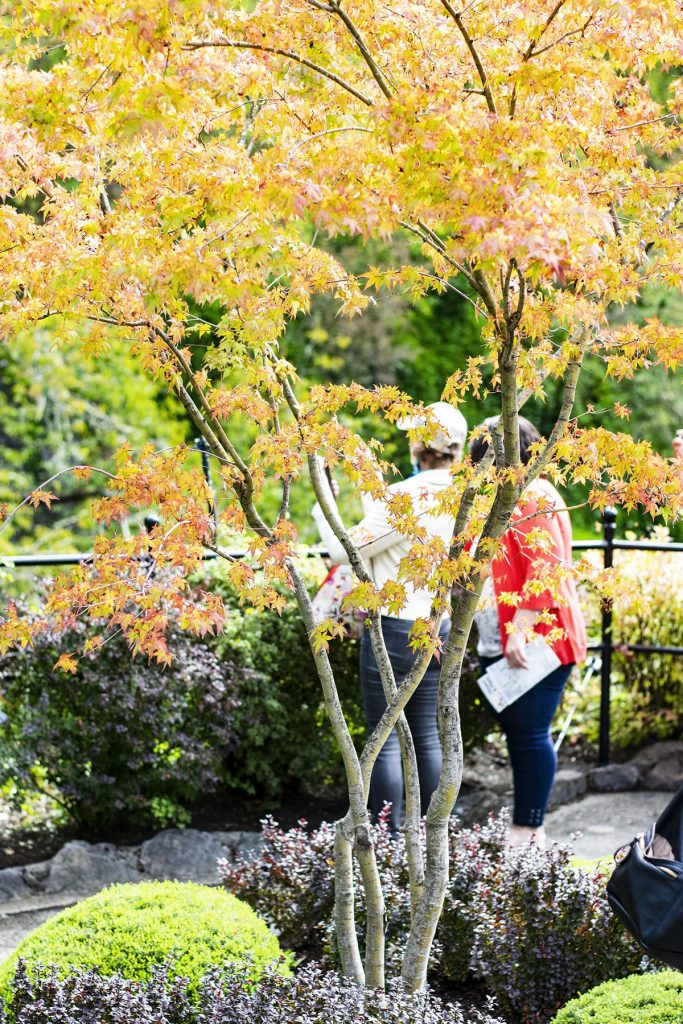Alaska shore excursions in Victoria at Butchart Gardens in autumn