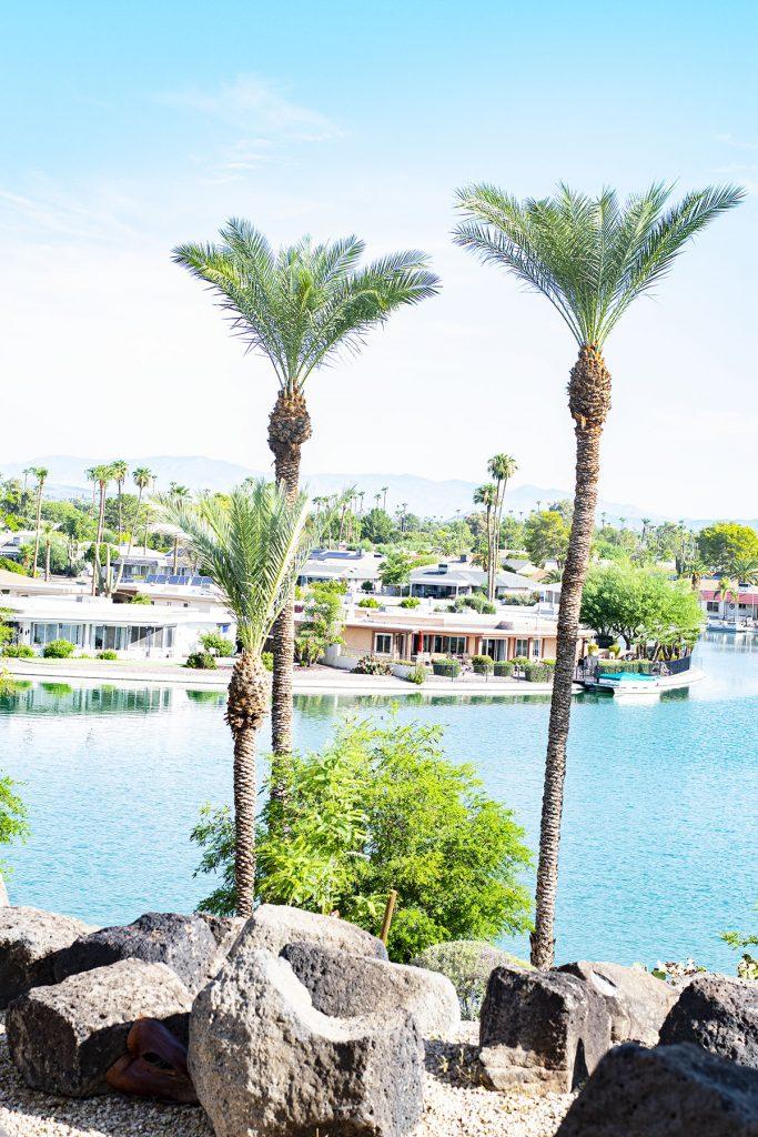 Palm trees in Arizona