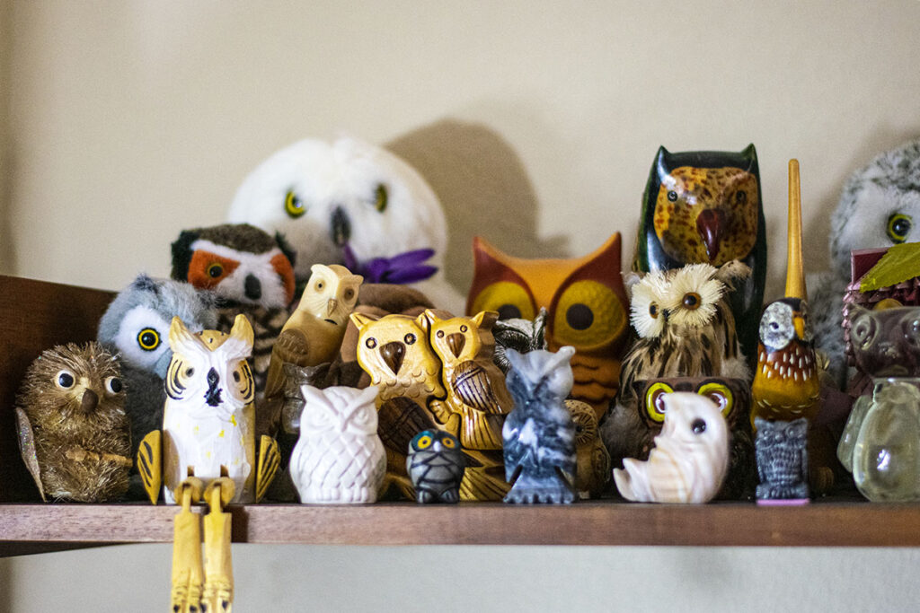 Where is home for owls