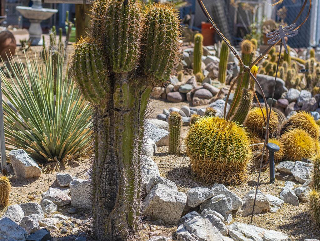 Garden area at the RV park